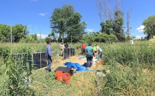 BREE researchers put up solar panels in the wetland site.